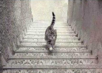 gatto-illusione-ottica210